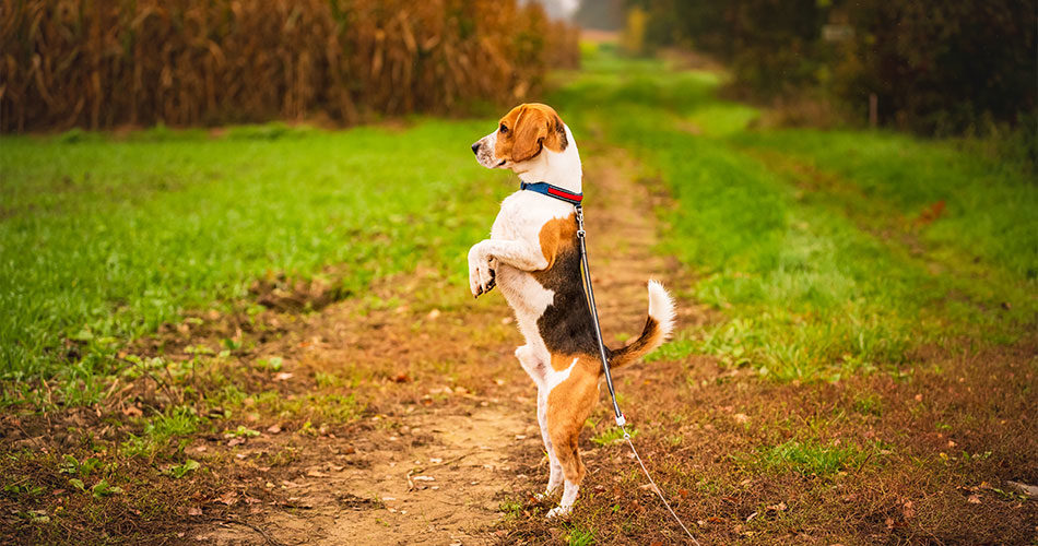 Dog Walking Exercising